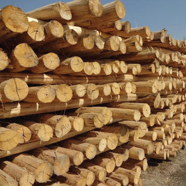 نکته های مهم ورود به بازار صنعت چوب ایران چیست؟!