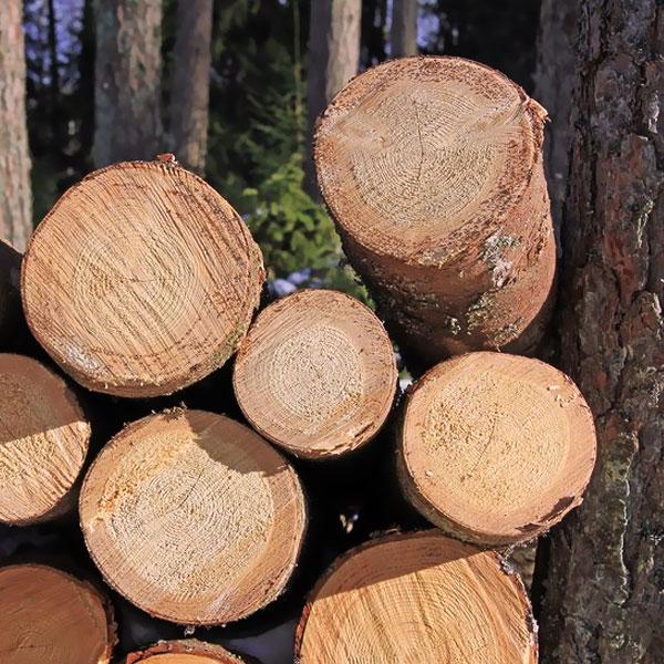 چوب ویلای چوبی چه ویژگیهایی دارد؟