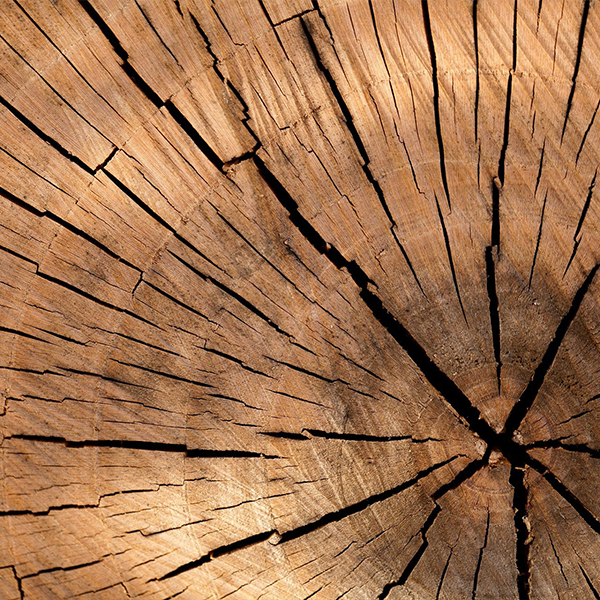 تشخیص چوب کار سختی نیست، اگر این 7 نکته را بدانید