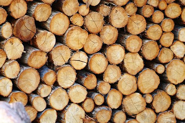 تست چوب